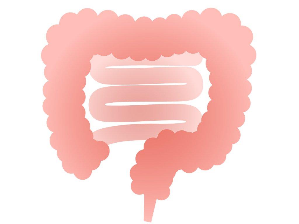 【第一回】 腸が重要な臓器となる理由(わけ) 人類は腸管から進化してきた