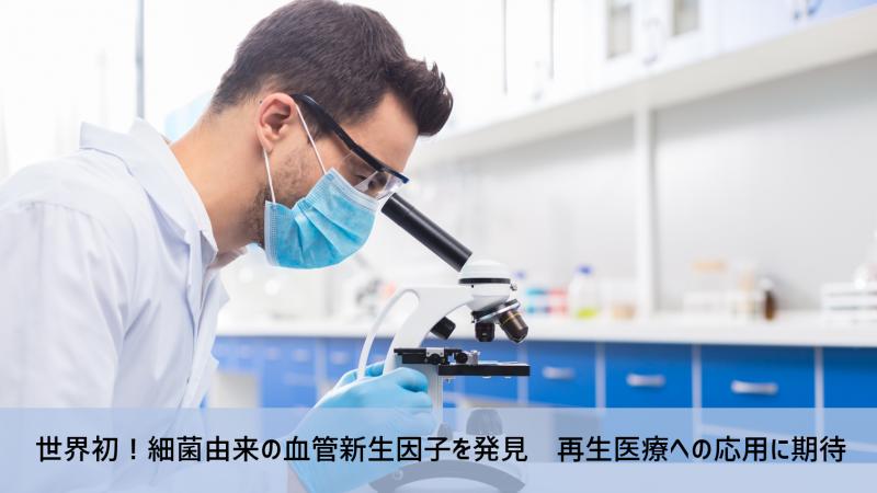 世界初!細菌由来の血管新生因子を発見 再生医療への応用に期待